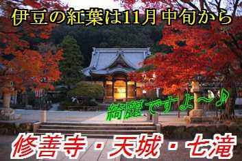kouyo_201511040213402ad.jpg