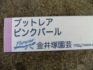DSCF1919_convert_20151106165942.jpg