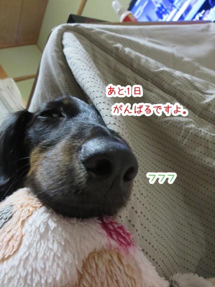 IMG_271106_2.jpg