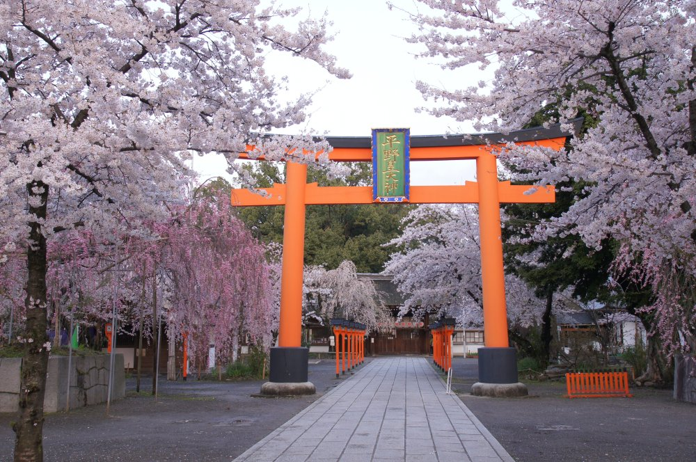 平野神社 (1)