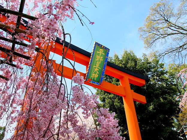 平野神社 (2)