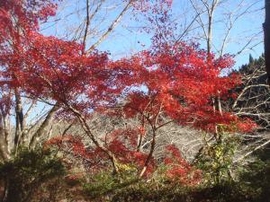 笹戸温泉の河原の紅葉