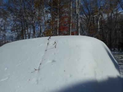 早すぎる積雪