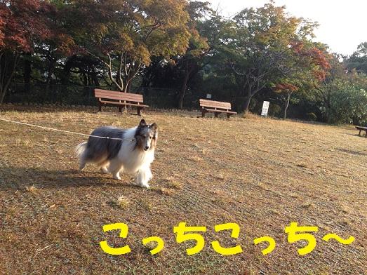 源氏山94