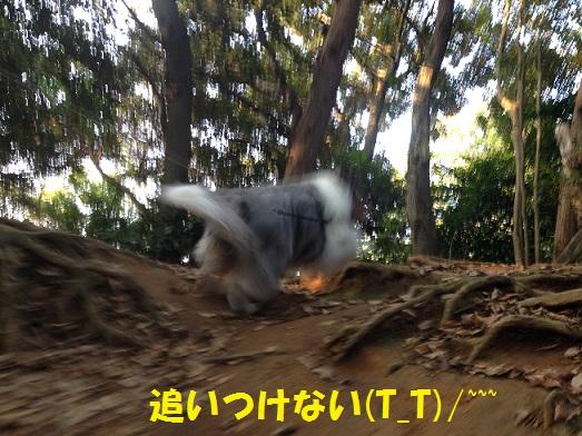 源氏山01