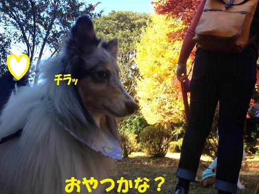 源氏山00