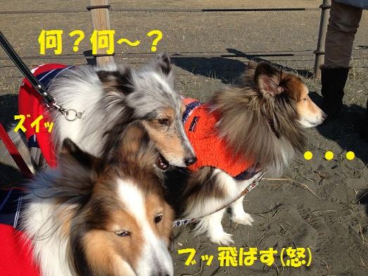 ロコちゃん3