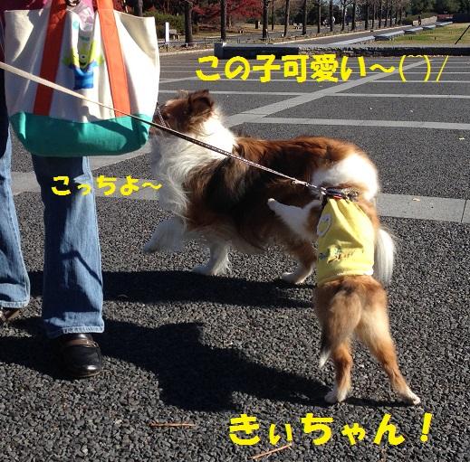 はーちゃん4