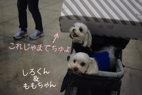 西日本12