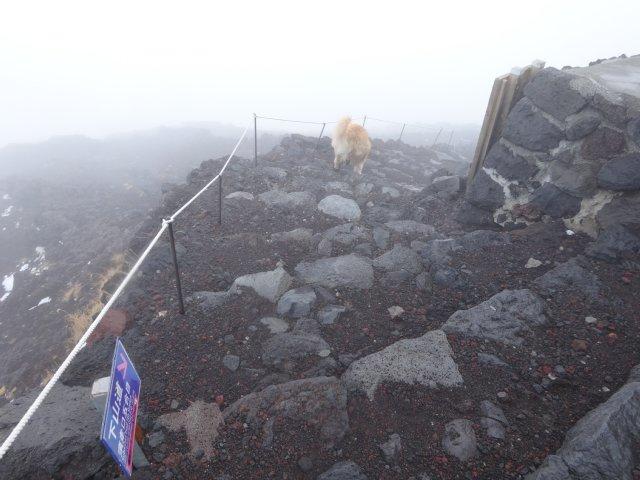 富士山 須走口 犬登山 2015-10-16 245