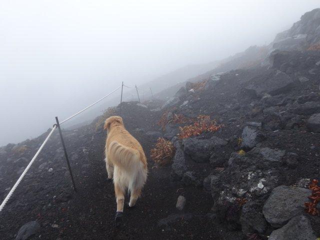 富士山 須走口 犬登山 2015-10-16 246