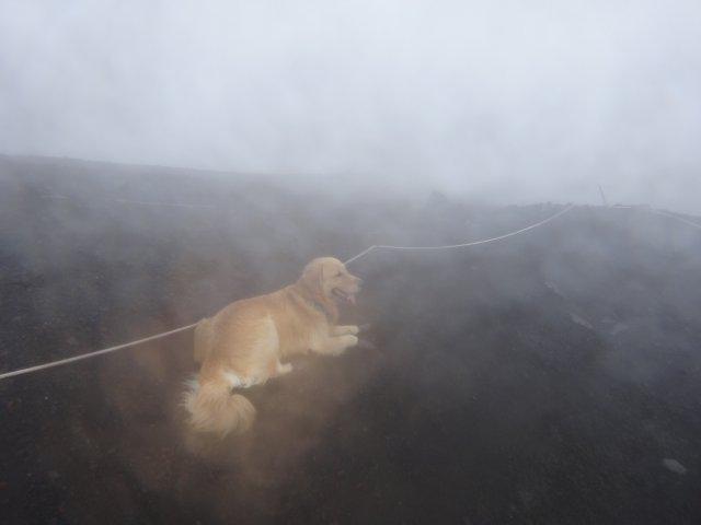 富士山 須走口 犬登山 2015-10-16 252