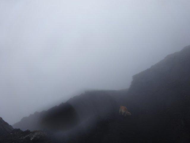富士山 須走口 犬登山 2015-10-16 258