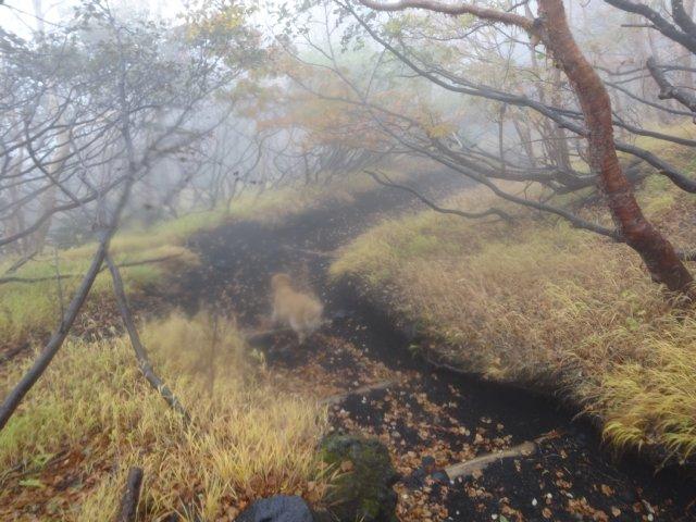 富士山 須走口 犬登山 2015-10-16 275