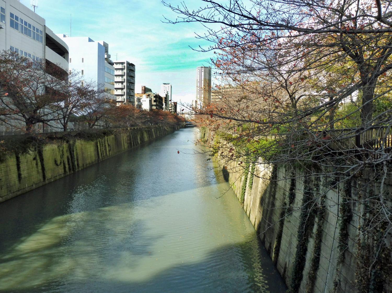 th_目黒川6