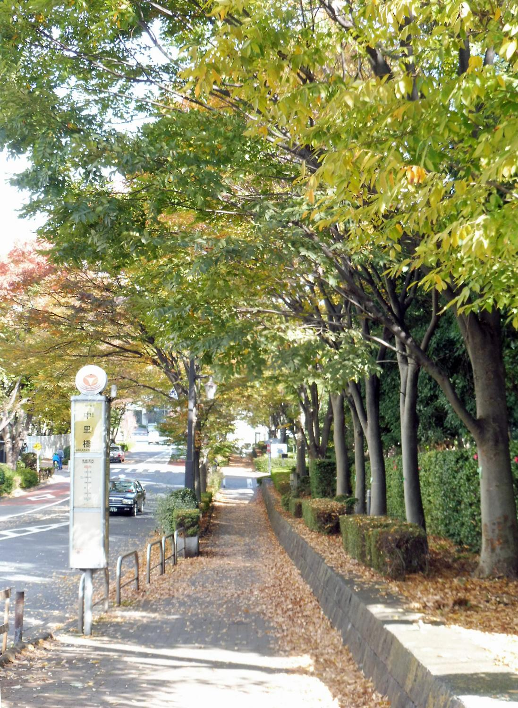 th_目黒川2