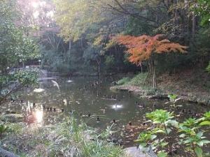 むじなが池1