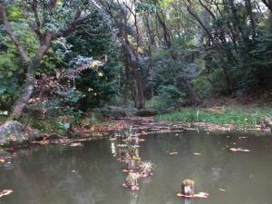 むじなが池2
