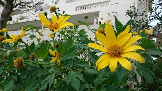 黄色い花№2