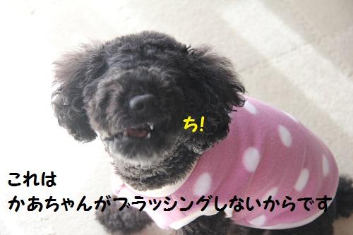 IMG_20933.jpg