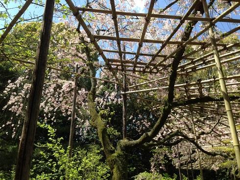 京都4月ブ9
