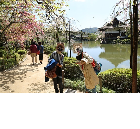 京都4月ブ14
