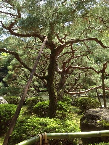 京都4月ブ11