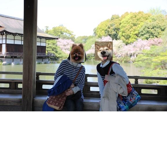 京都4月ブ15