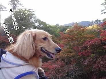 kinako3566.jpg