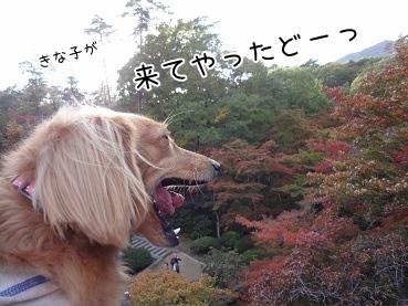 kinako3567.jpg