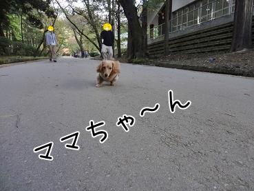 kinako3569.jpg
