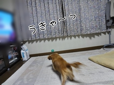 kinako3588.jpg