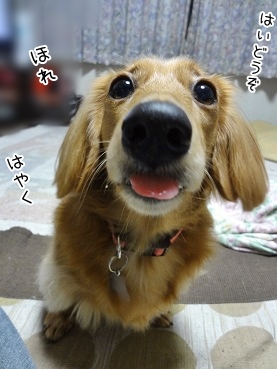 kinako3598.jpg