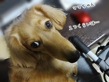 kinako3603.jpg