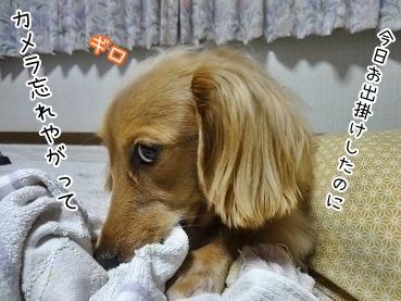 kinako3606.jpg