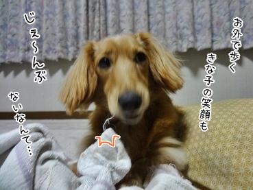 kinako3609.jpg