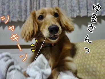 kinako3610.jpg