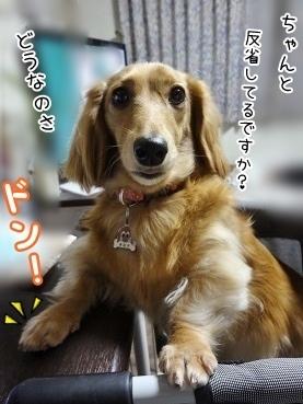 kinako3629.jpg