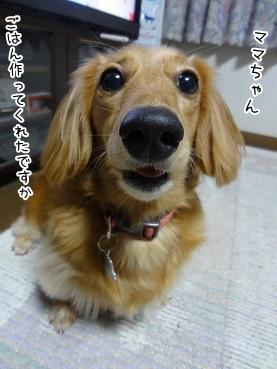 kinako3655.jpg