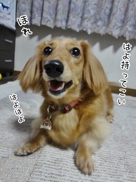 kinako3656.jpg