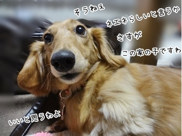 kinako3664.jpg