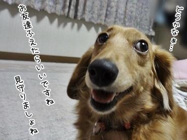 kinako3668.jpg