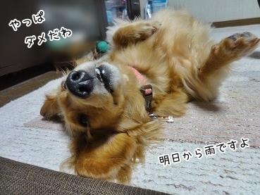 kinako3681.jpg