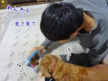 kinako3692.jpg