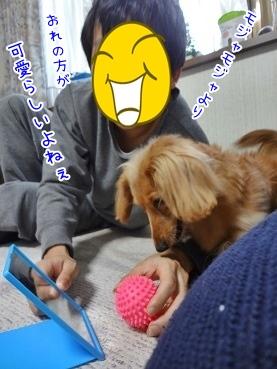 kinako3696.jpg