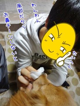 kinako3700.jpg