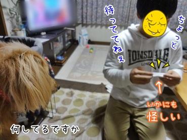 kinako3701.jpg