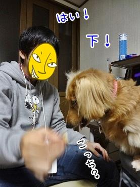 kinako3710.jpg