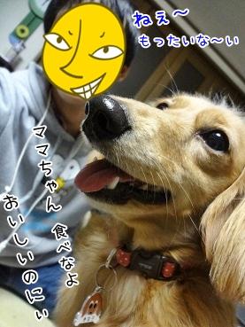 kinako3714.jpg