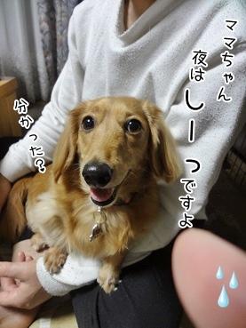 kinako3718.jpg